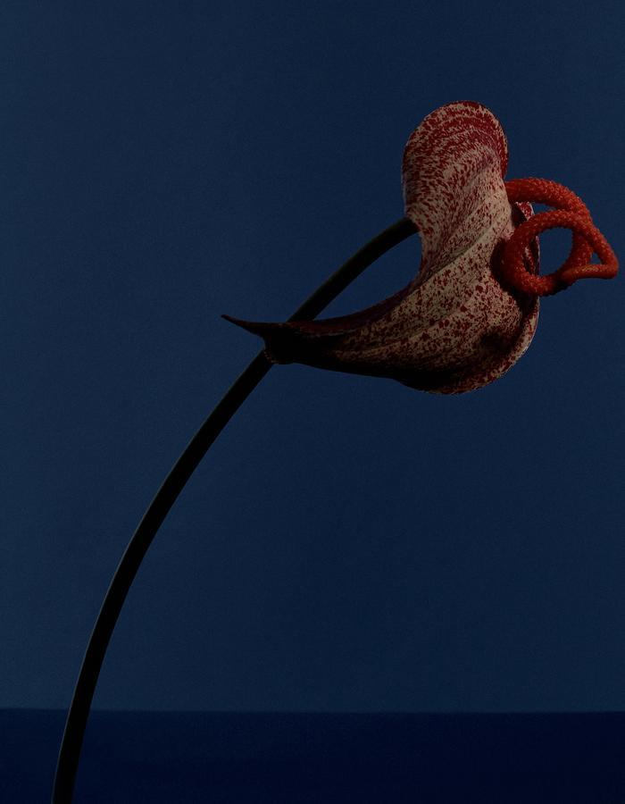- Ricardo Rivera Photographer - Biss Lau design